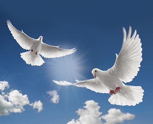 Doves-doves-31209090-2560-2069.jpg