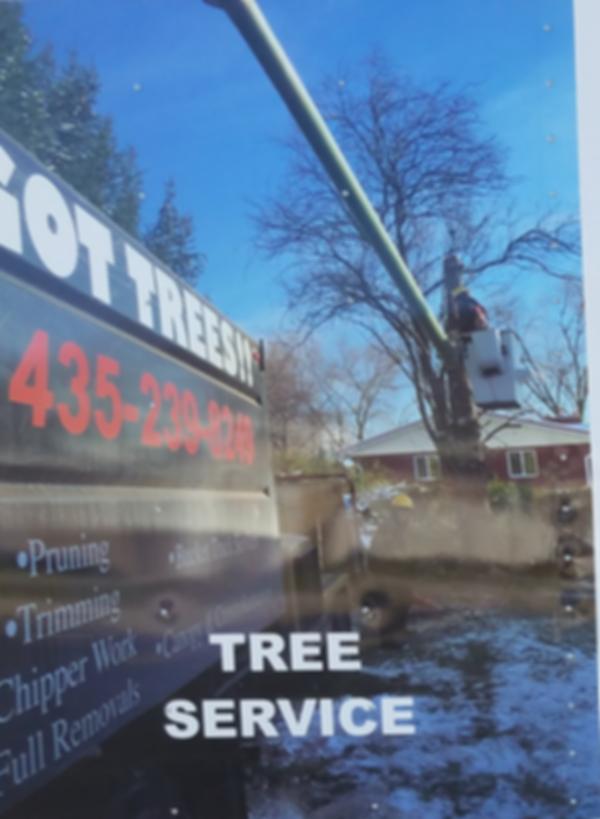 IMT Trees
