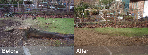 Stump grind and removal