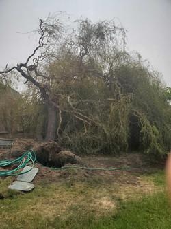 Fallen Tree Clean up