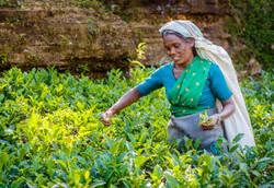 20150319_Sri Lanka_0201 - Kopie