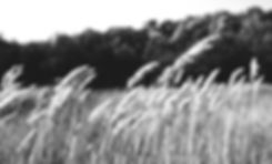Wheat%20Field_edited.jpg