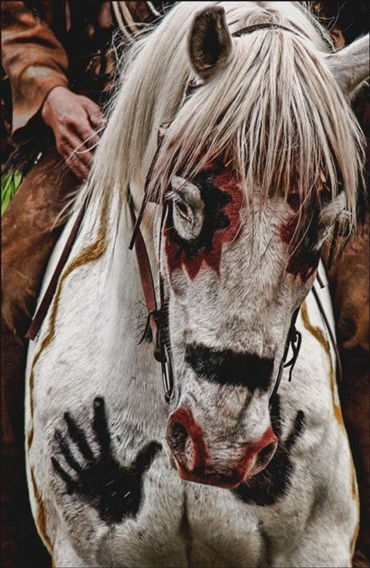 kiowa horse.jpg