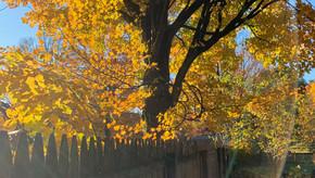 Blue Jays and Burning Leaves