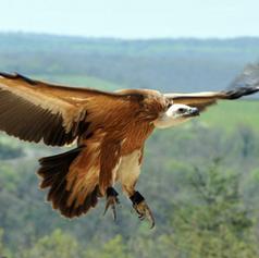 Le rocher des aigles
