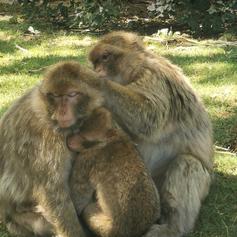 La Forêt des singes