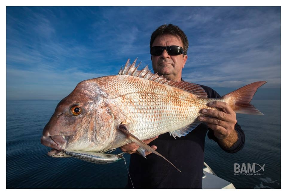 Snapper-School Bully: Sth Australia