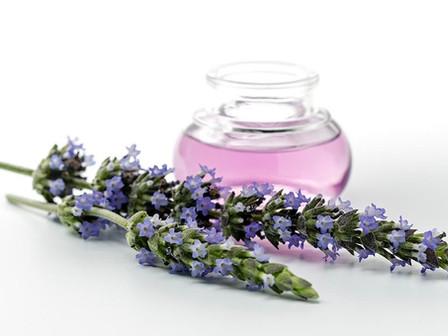 The Medicinal Allure of Lavender Oil