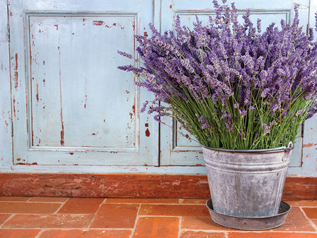10 Uses for Lavender