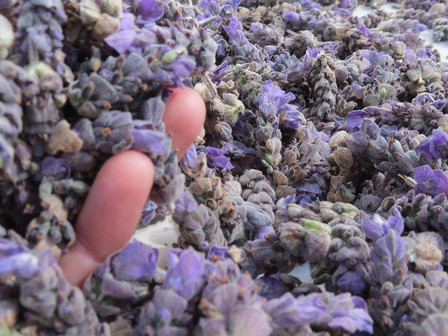 Lavender Confetti for Romance