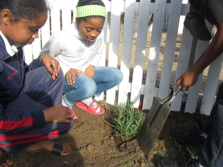 Teaching the kids from Lavender Hill about Lavender