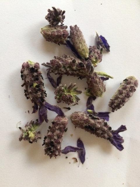 Lavender Confetti Heads - R780 / R535 / R410