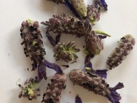 Lavender Confetti
