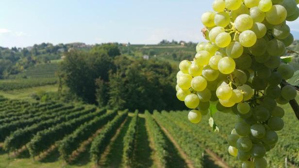 Ad Amorem Vini www.Prachtwijnen.com
