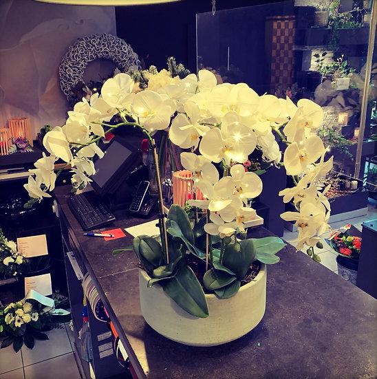 Grote ronde pot met zijde orchideeën...