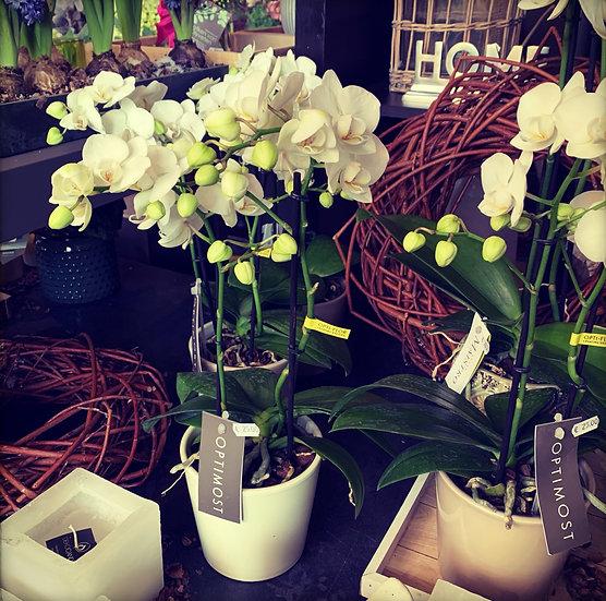 Witte orchidee in stenen potje...