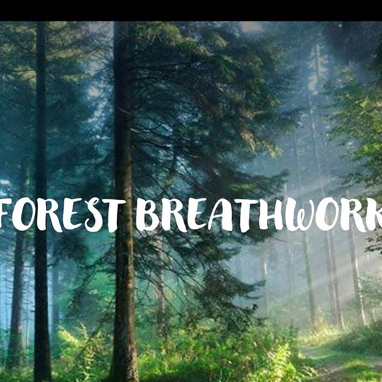 Forest Breathwork  (2)