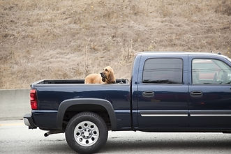 pickup truck and dog.jpg