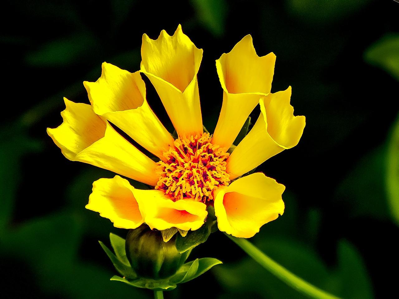 flower-273391_1280