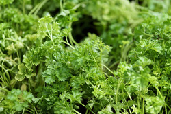 parsley-2460046_960_720