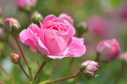 pink-3475452_1280