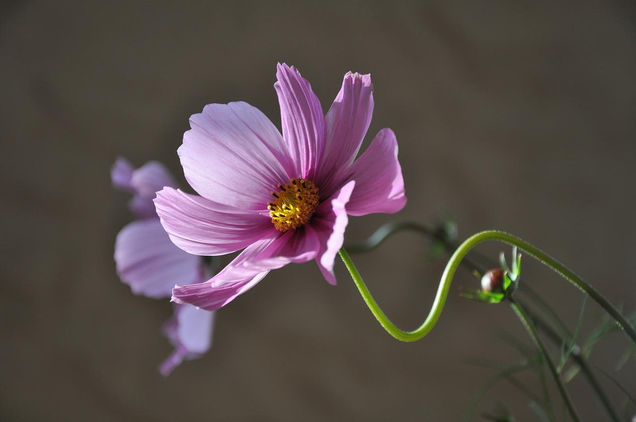 flower-639208_1280