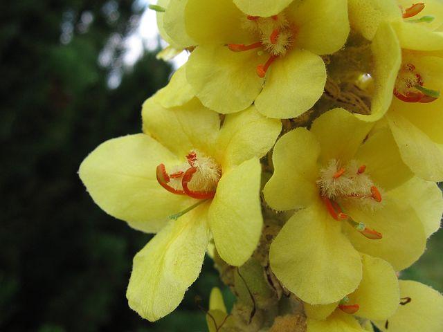 flower-1143302__480