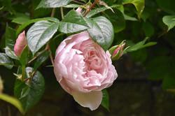 flowers-4233672_1280
