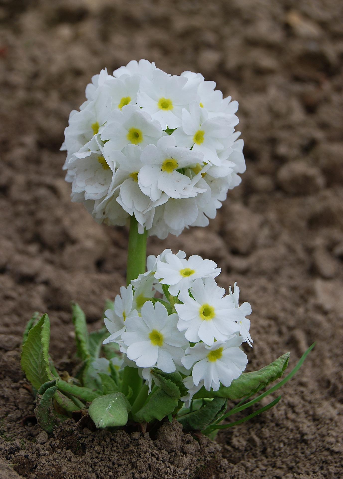 flower-3241730_1920
