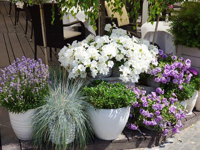 flowers-1087378__480