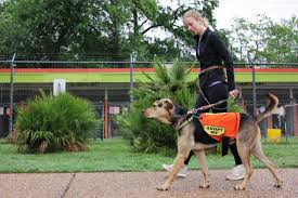 A volunteer in Austin, Texas the largest No Kill community in the United States, takes a dog for a walk.