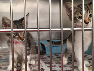Opinion: Clear The Shelters Helps Shelter Pets