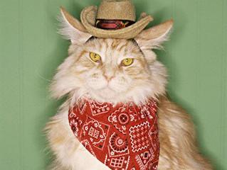 Austin Pets Alive! Earns 4 Million Dollars!