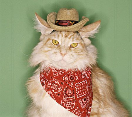 A cat dressed as a Texas cat.