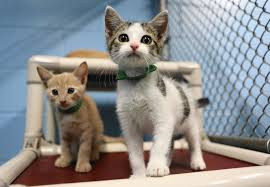No Kill Fastrack: One Year in Lake County, Florida