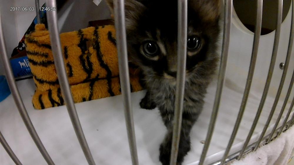 A lucky San Diego kitten.