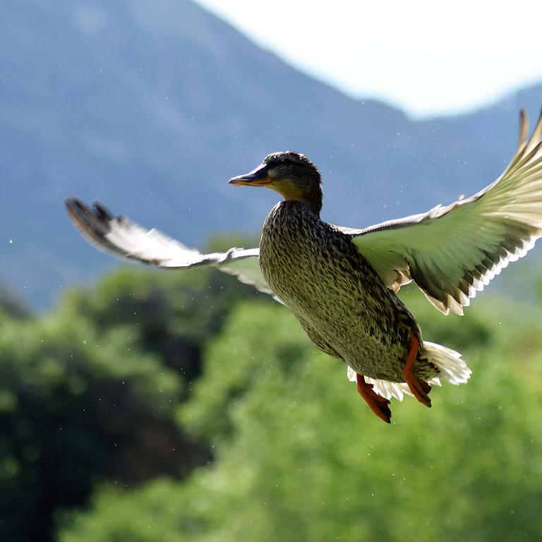 2021 Big Bucks and Ducks - Waterfowl Hunt - Moro AR