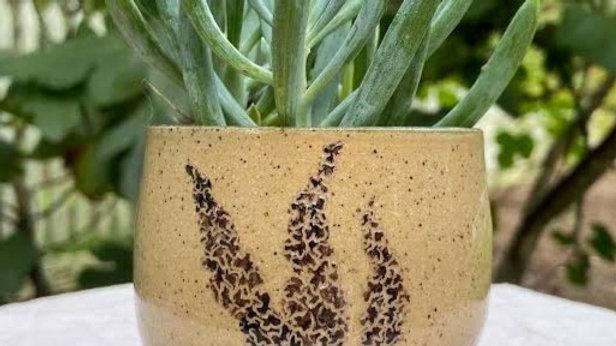 Succulent Bowl - Lavender