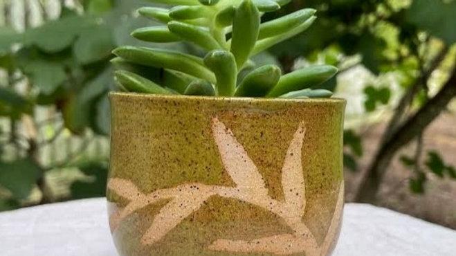 Succulent Bowl - Olive