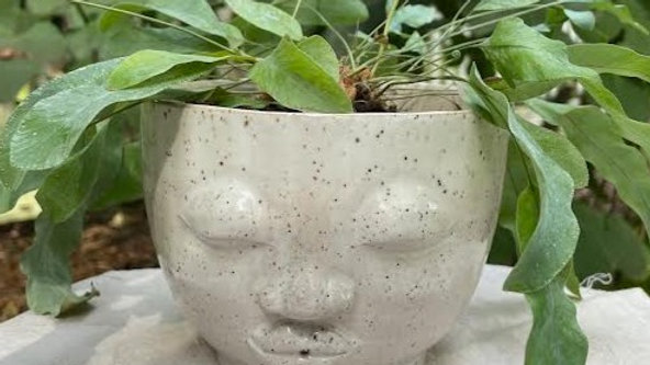 Medium Head Planter - White