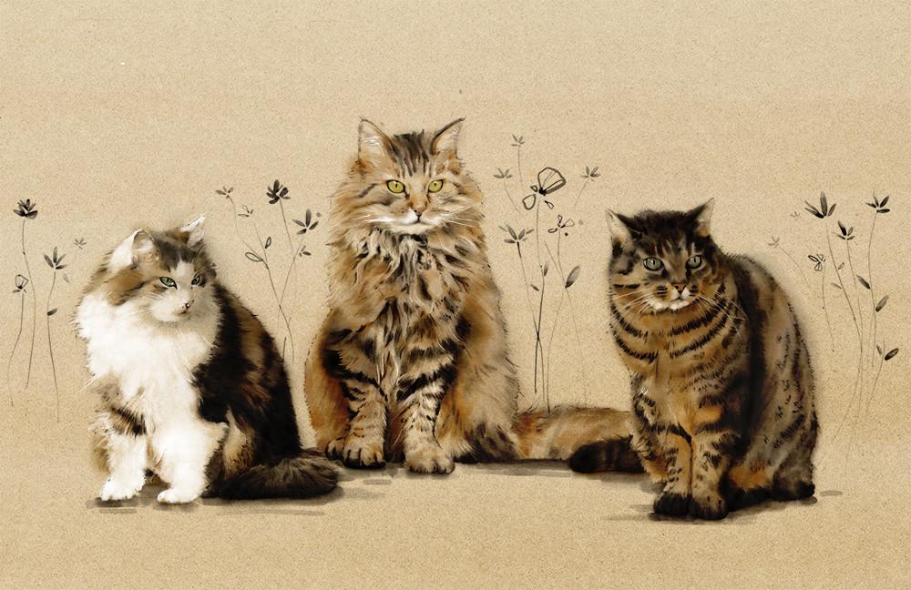 Les chats de Odile