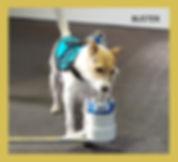 Copy of Copy of Buster.jpg