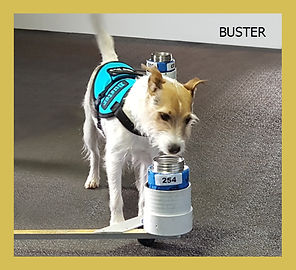 Copy of Copy of Buster.jpg