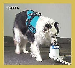 Topper preferred.jpg