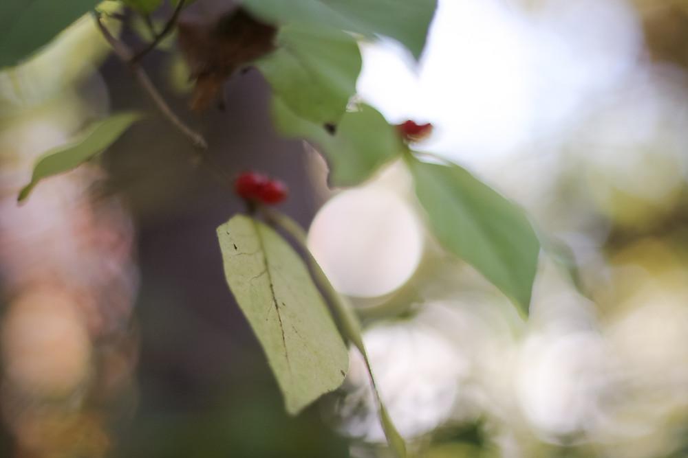 yates cider mill, greenery