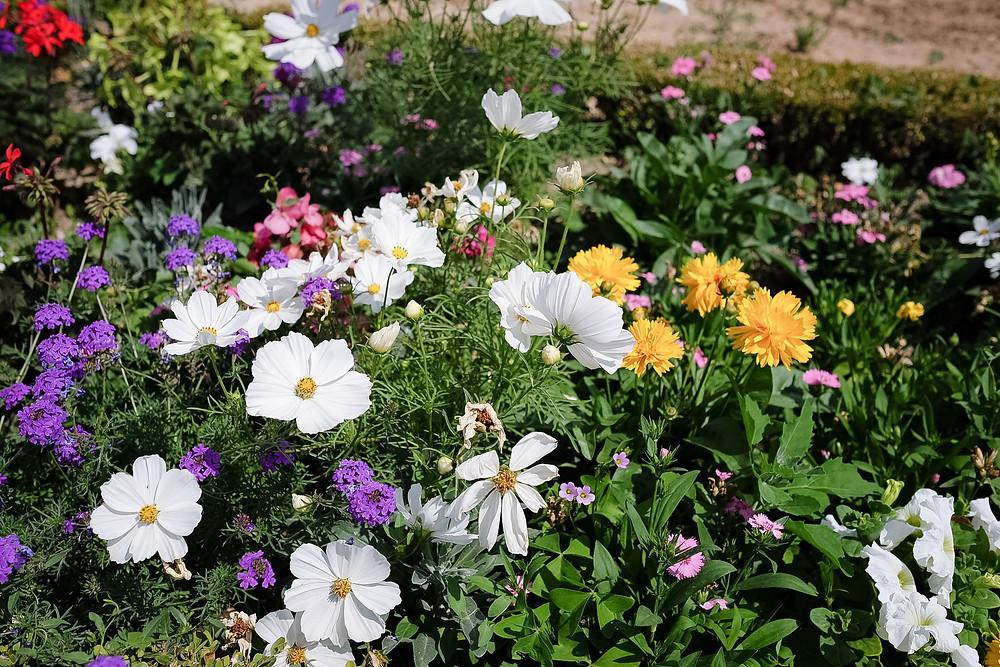 flowers at Château de Versailles garden