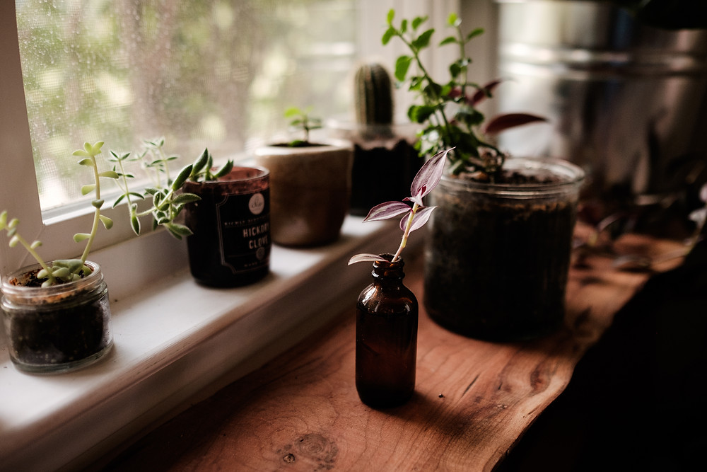 plant by window, moody light