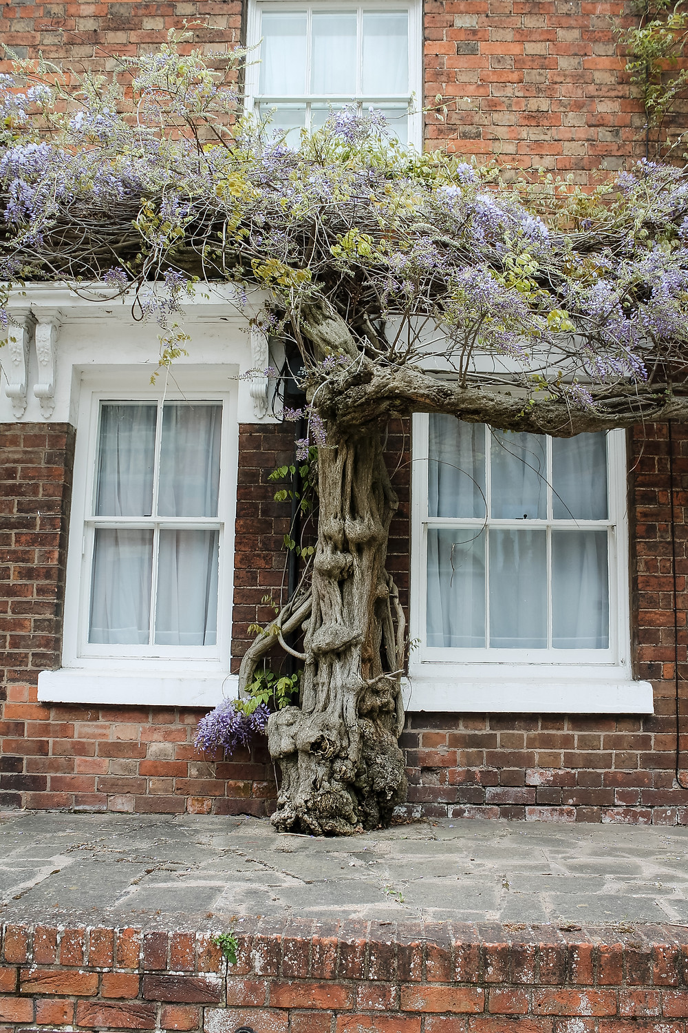 england, purple flowers, tree on architecture