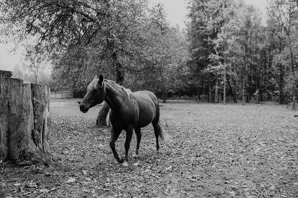 Allentown Michigan barn wedding with horses