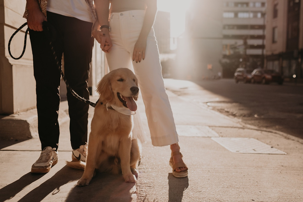 Sunset engagement session with dog in Detroit. Photographed by Nicole Leanne Photography.